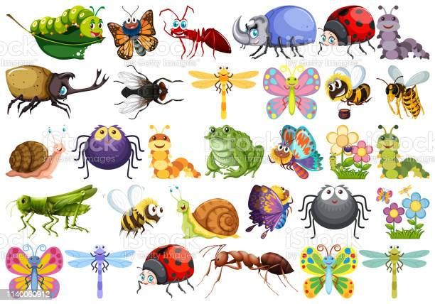 Set of insect character vector id1140060912?b=1&k=6&m=1140060912&s=612x612&h=lset2bqbbrrgd0nnax8yggll6tqmcup0ab4csuow 7y=