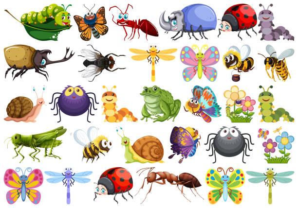 stockillustraties, clipart, cartoons en iconen met set van insect karakter - rups