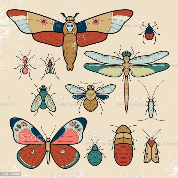 Set of insect vector id1141396085?b=1&k=6&m=1141396085&s=612x612&h=axc873gy fldgddt88ovcubdbka5g6m9bucbq75ames=