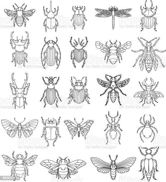 Set of insects illustrations on white background design elements for vector id955642174?b=1&k=6&m=955642174&s=612x612&h=fbn09ihooboqk 9 3a7 yfkqeochaezyn5mvqxbjgls=