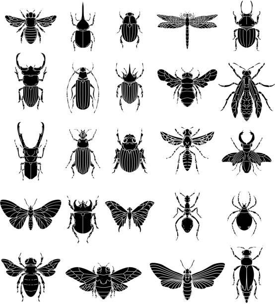 Set of insects illustrations on white background. Design elements for  label, emblem, sign, badge. Set of insects illustrations on white background. Design elements for  label, emblem, sign, badge. Vector image beetle stock illustrations