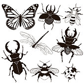 Set of insects isolated on a white background. Vector graphics.