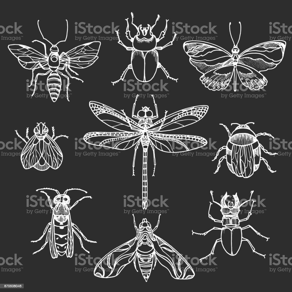 Set of insects on black background. Vector vector art illustration
