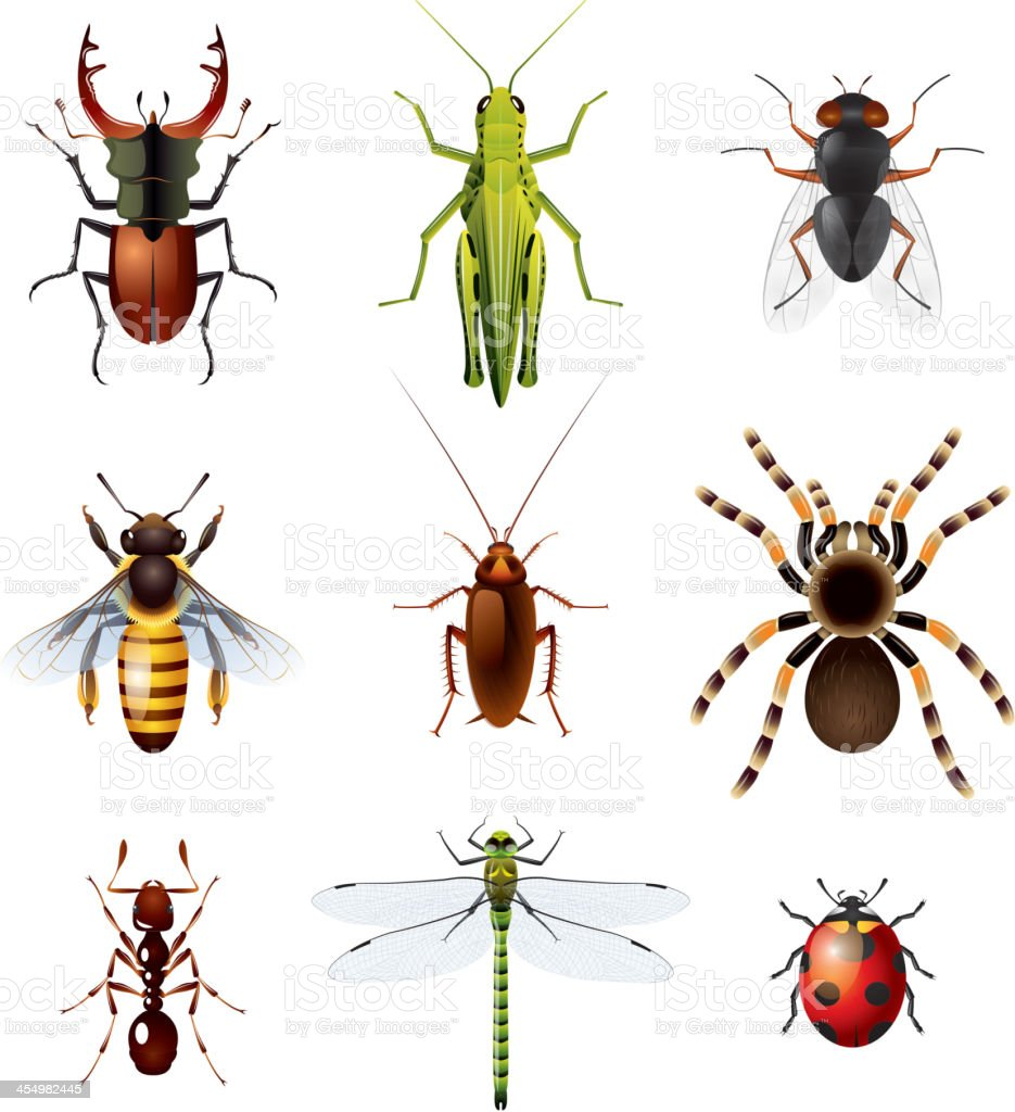 Set of insects on white background vector art illustration