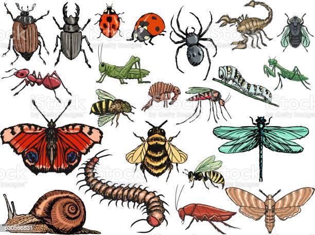 Set of insects vector id530566831?b=1&k=6&m=530566831&s=612x612&h=iceceyrce6r1aais2wbqncsswju1jpohmcftdg4fzoa=