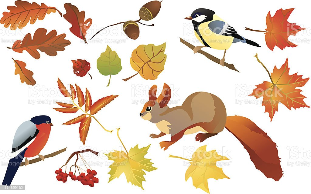 Set of isolated autumn forest leafs and birds royalty-free stock vector art
