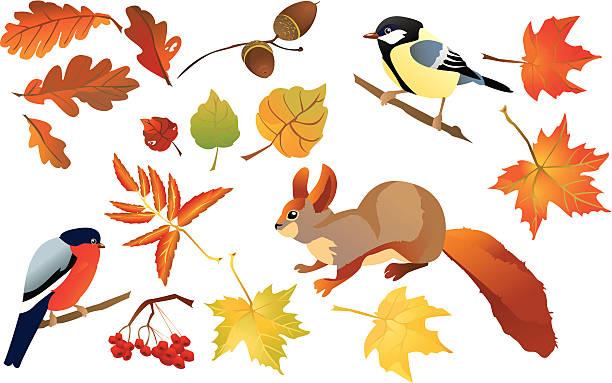 ilustrações de stock, clip art, desenhos animados e ícones de conjunto de isolado floresta de outono leafs e aves - lian empty