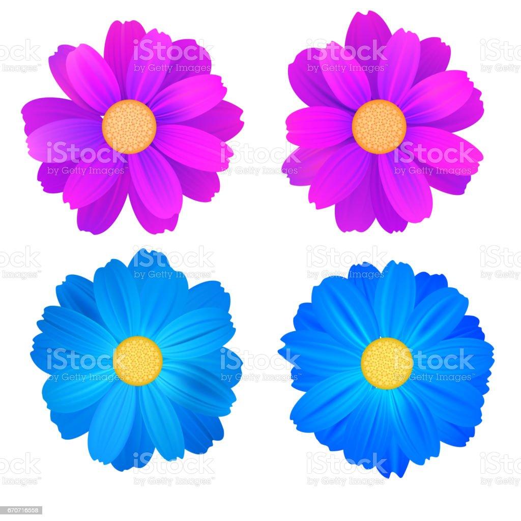 Ensemble De Bourgeons Isoles De Fleurs Gerbera Bleu Et Violet Vector