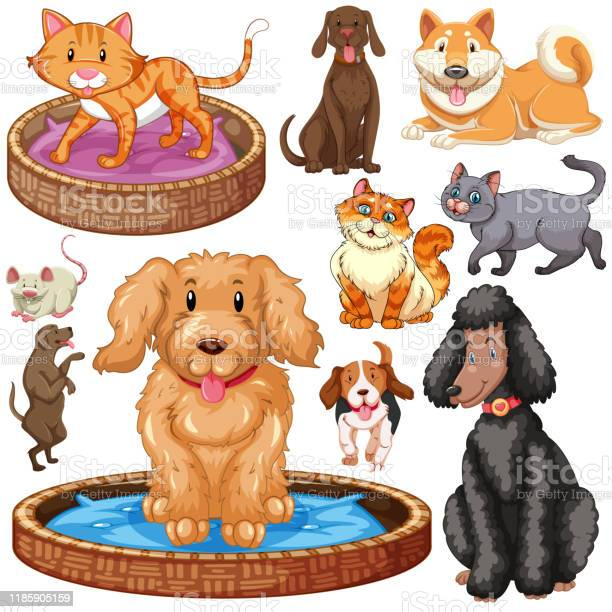 Set of isolated cats and dogs vector id1185905159?b=1&k=6&m=1185905159&s=612x612&h=xtylquf2r0ucrurg 1anqgek rabwccltbqwxv0muaa=