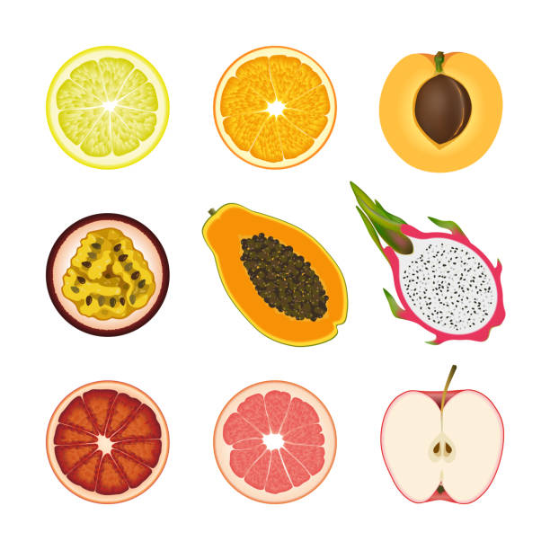 Pink Grapefruit Vektorgrafiken und Illustrationen - iStock