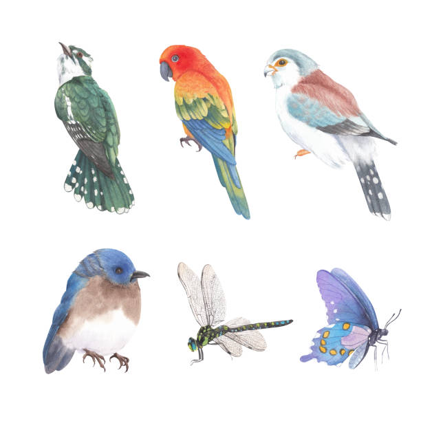 illustrazioni stock, clip art, cartoni animati e icone di tendenza di set di elementi isolati di insetti acquerello e illustrazione di uccelli su sfondo bianco. - farfalla ramo