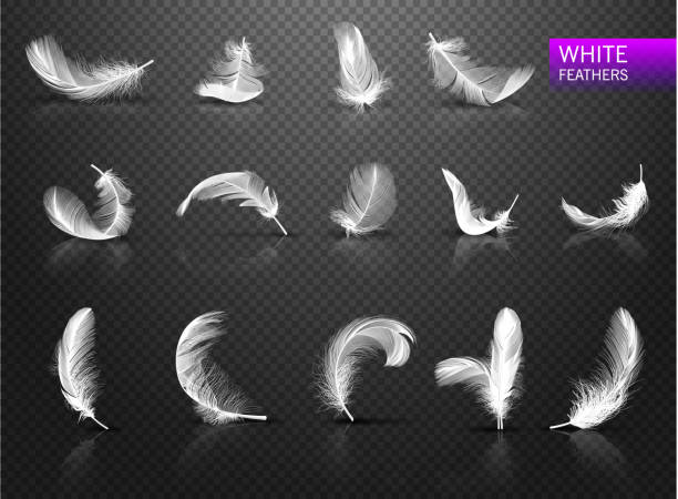 Set of isolated falling white fluffy twirled feathers on transparent background in realistic style. Vector Illustration Set of isolated falling white fluffy twirled feathers on transparent background in realistic style vector illustration feather stock illustrations