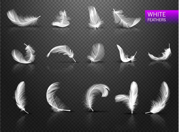 stockillustraties, clipart, cartoons en iconen met verzameling van geïsoleerde vallende witte pluizige draaide veren op transparante achtergrond in de realistische stijl. vectorillustratie - stekels