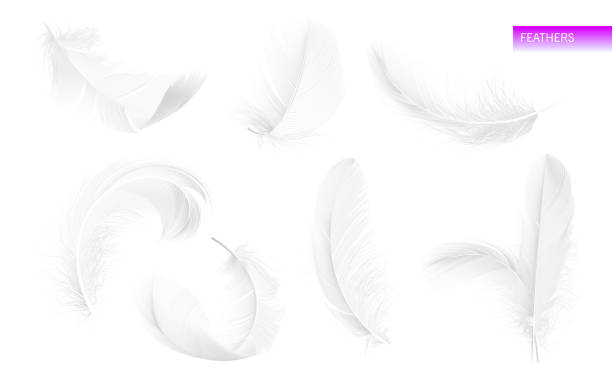 Set of isolated falling white fluffy twirled feathers on white background in realistic style. Vector Illustration Set of isolated falling white fluffy twirled feathers on white background in realistic style vector illustration feather stock illustrations