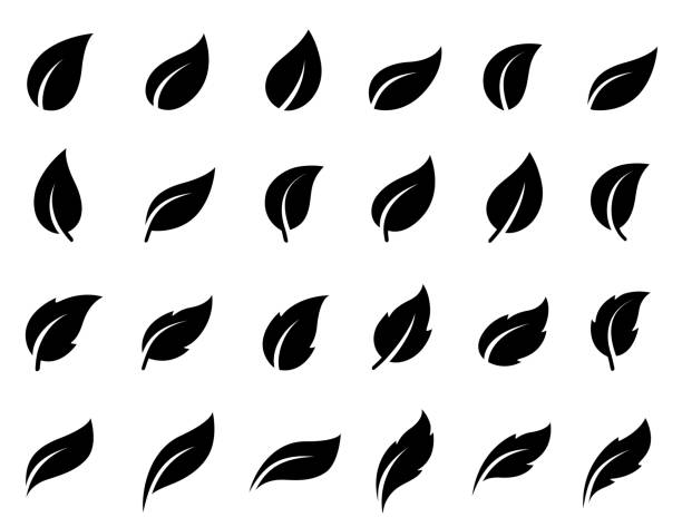 illustrazioni stock, clip art, cartoni animati e icone di tendenza di set of isolated leaves icons - foglie