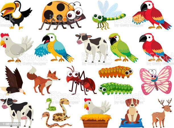 Set of isolated objects theme animals vector id1188155532?b=1&k=6&m=1188155532&s=612x612&h=g0rewluzznhqwjyvifb9 hbuao5odjhvp3uqf fr5dy=