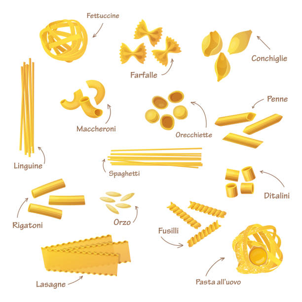 Set of isolated pasta or food for cooking Set of isolated italian pasta. Fettuccine and farfalle, conchiglie and linguine, maccheroni and orecchiette, penne and spaghetti, rigatoni and orzo, fusilli and ditalini, lasagne. Food and nutrition conchiglie stock illustrations