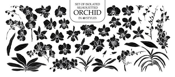 Set of isolated silhouette orchid in 40 styles. Cute hand drawn vector illustration in white outline and black plane. Set of isolated silhouette orchid in 40 styles. Cute hand drawn vector illustration in white outline and black plane on white background. orchid stock illustrations