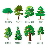Set of isolated trees in summer season. Forever green trees and trees with falling leaves. Cartoon vector illustration.