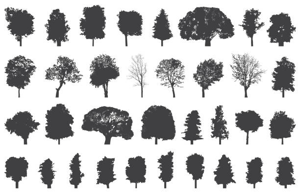 set of isolated trees silhouettes set of isolated trees silhouettes cottonwood tree stock illustrations