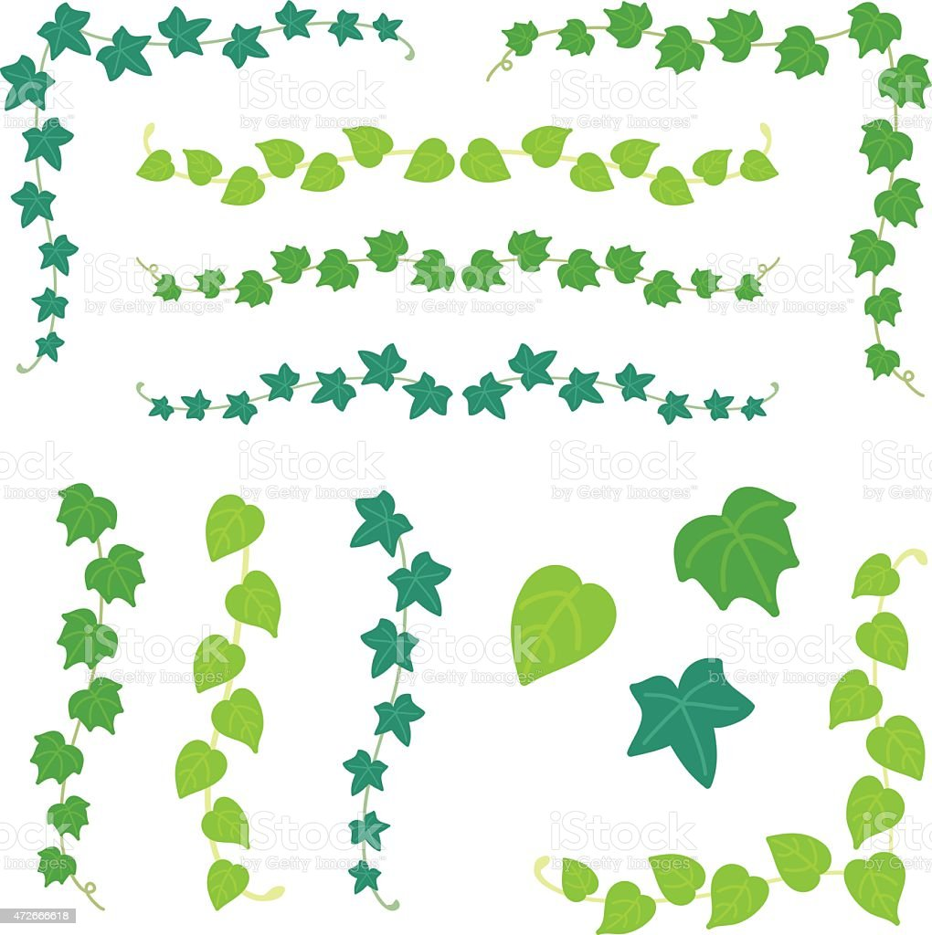 set of ivy branch vector art illustration