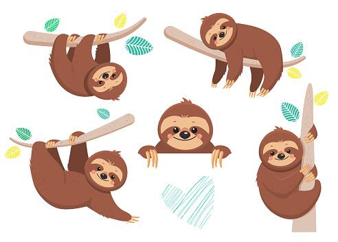 Set of joyful sloth sitting on a branch