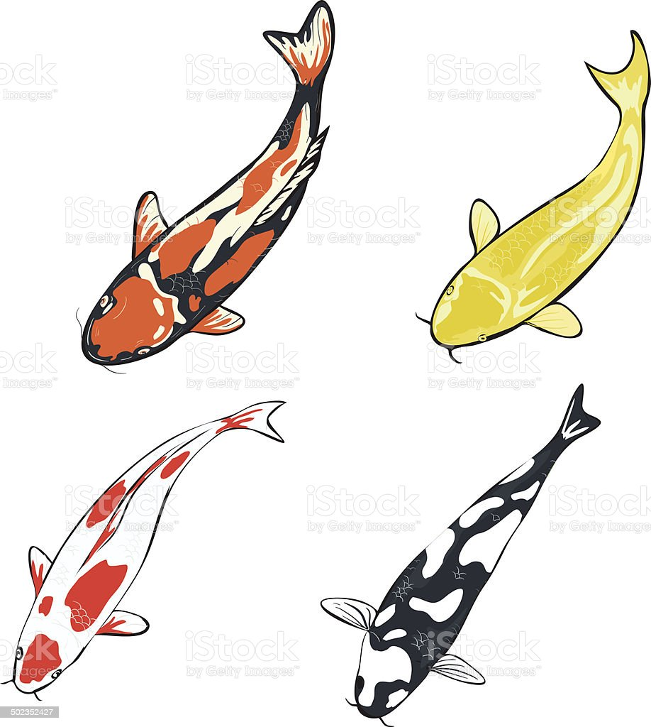 Set of koi fish illustration stock vector art 502352427 for Koi fish vector