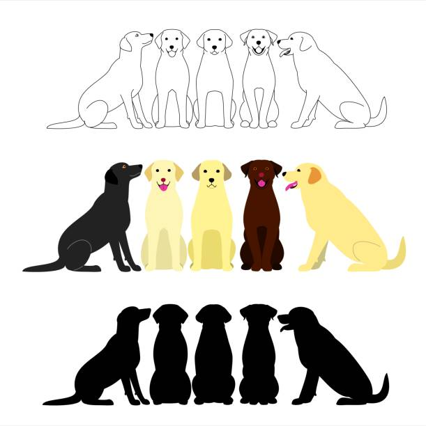 illustrazioni stock, clip art, cartoni animati e icone di tendenza di set of labrador retriever group - labrador retriever