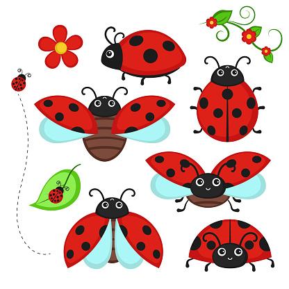 Set of ladybug characters.