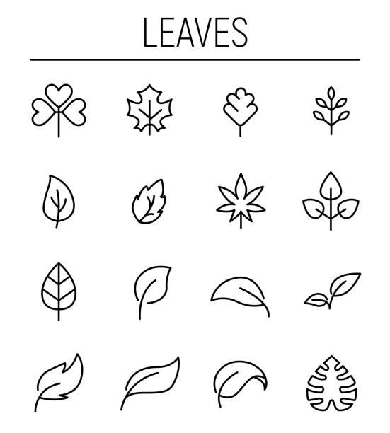 stockillustraties, clipart, cartoons en iconen met set van blad iconen in moderne dunne lijnstijl. - spruitjes
