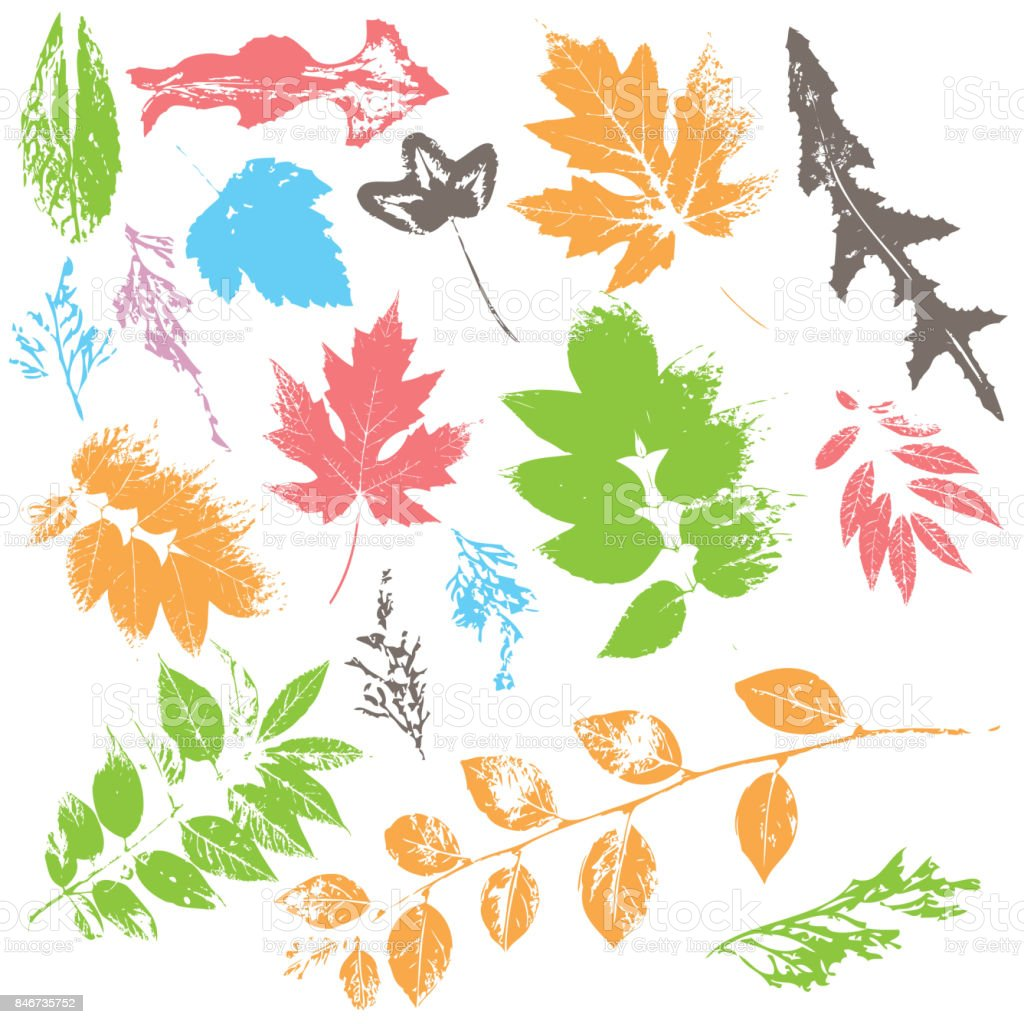 Set of leaf silhouettes in color vector art illustration