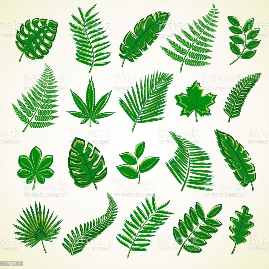 Set Of Leaves Collection Icon Tropical Leaves Vector Stock Illustration Download Image Now Istock Check out our tropical leaf icon selection for the very best in unique or custom, handmade pieces from our shops. set of leaves collection icon tropical leaves vector stock illustration download image now istock