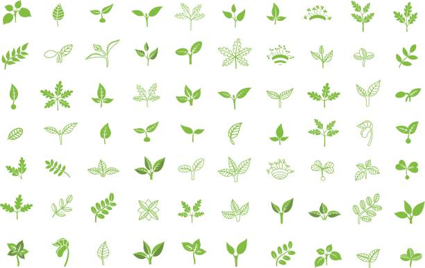 set of leaves design elements. sprout new life vector icon - plant stock illustrations, clip art, cartoons, & icons
