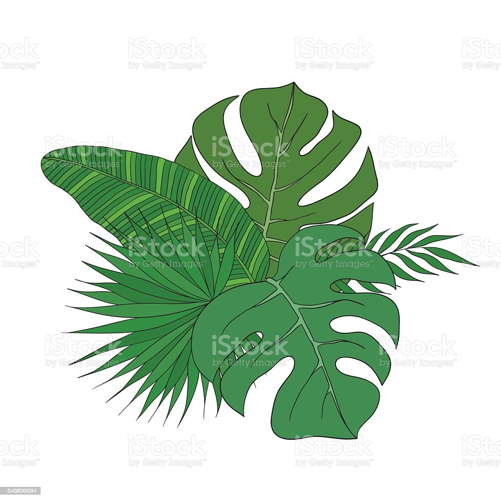 set of leaves different species palm trees stock vector art