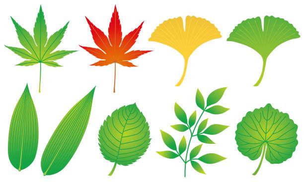 葉のセットです。和食の付け合わせ。 - わさび点のイラスト素材/クリップアート素材/マンガ素材/アイコン素材