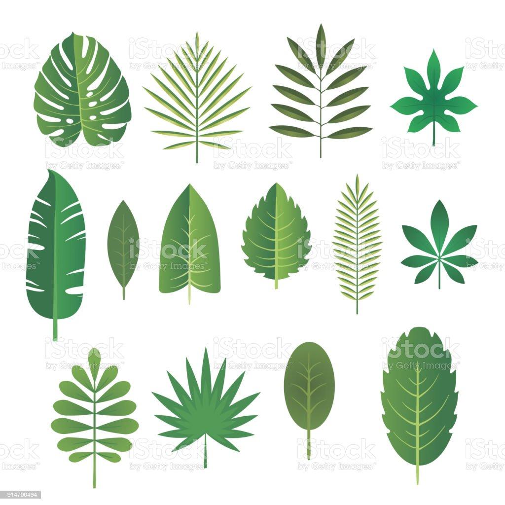 Set of leaves of tropical plants. Vector illustration. vector art illustration
