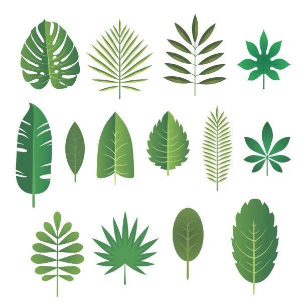 illustrations, cliparts, dessins animés et icônes de ensemble de feuilles de plantes tropicales. illustration vectorielle. - partir