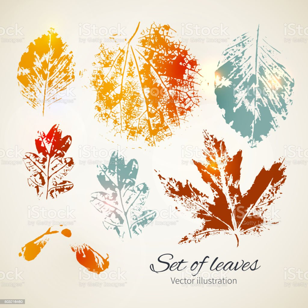 Set of leaves. Seasonal collection. vector art illustration