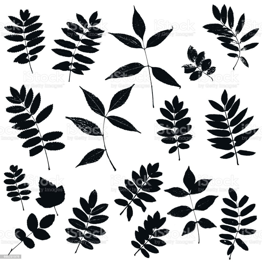 set of leaves silhouettes stock vector art 690291976 istock