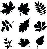 Set of leaves. Vector black silhouettes.