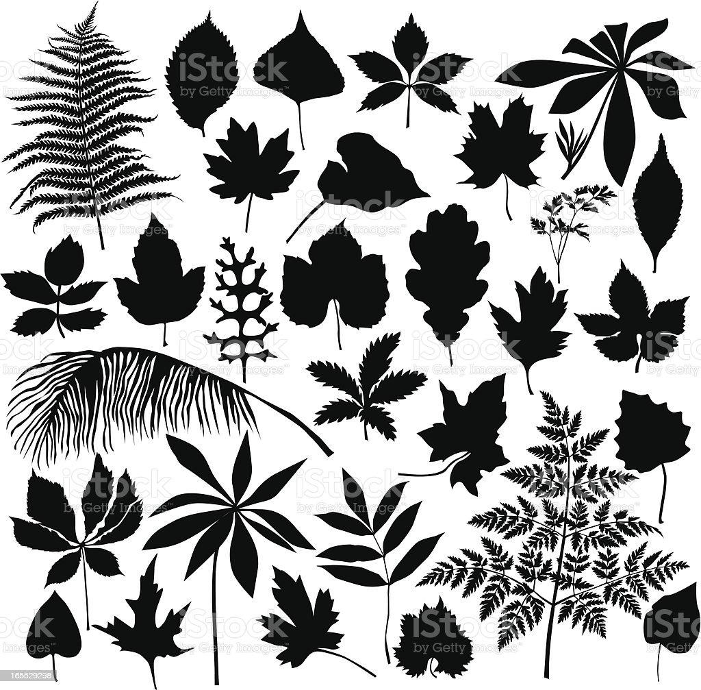 Set of leaves vector art illustration