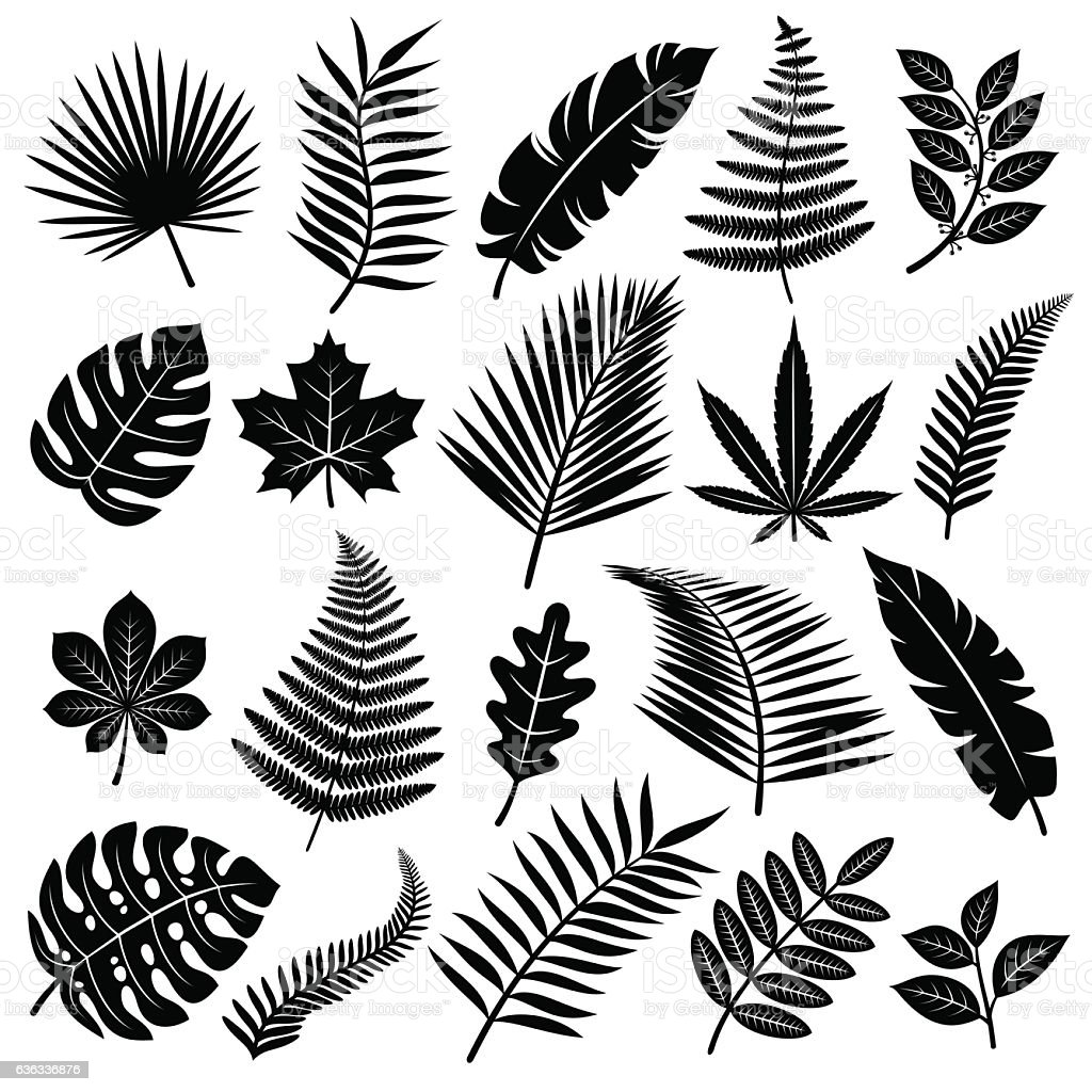 Set of leaves. Vector