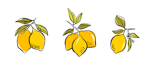 Set of lemon on a branch with green leaves. Hand drawing with ink and stains. Simple doodle of a lemon isolated on a white background. Fruit summer element for design