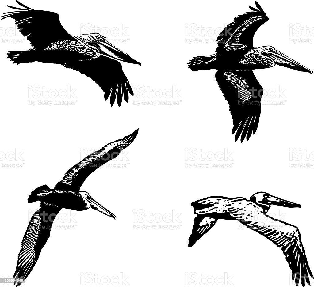 Set Of Line Art Pelicans, Isolated On White vector art illustration
