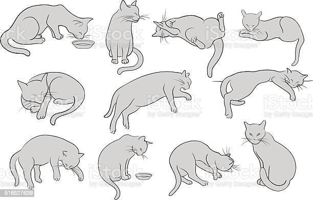 Set of line cats silhouette vector id516527639?b=1&k=6&m=516527639&s=612x612&h=ptwg7ir tegboe1utmsiylgvjwlelvtmdouugdsdtyu=
