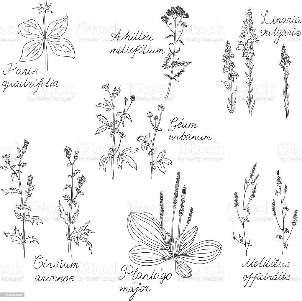 Ensemble De La Ligne De Dessin Avec Des Noms De Plantes