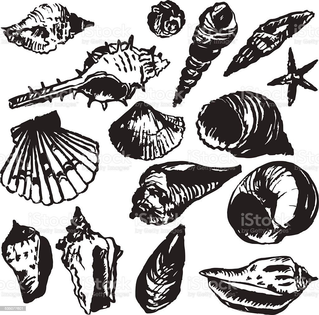set of line drawing shells vector art illustration