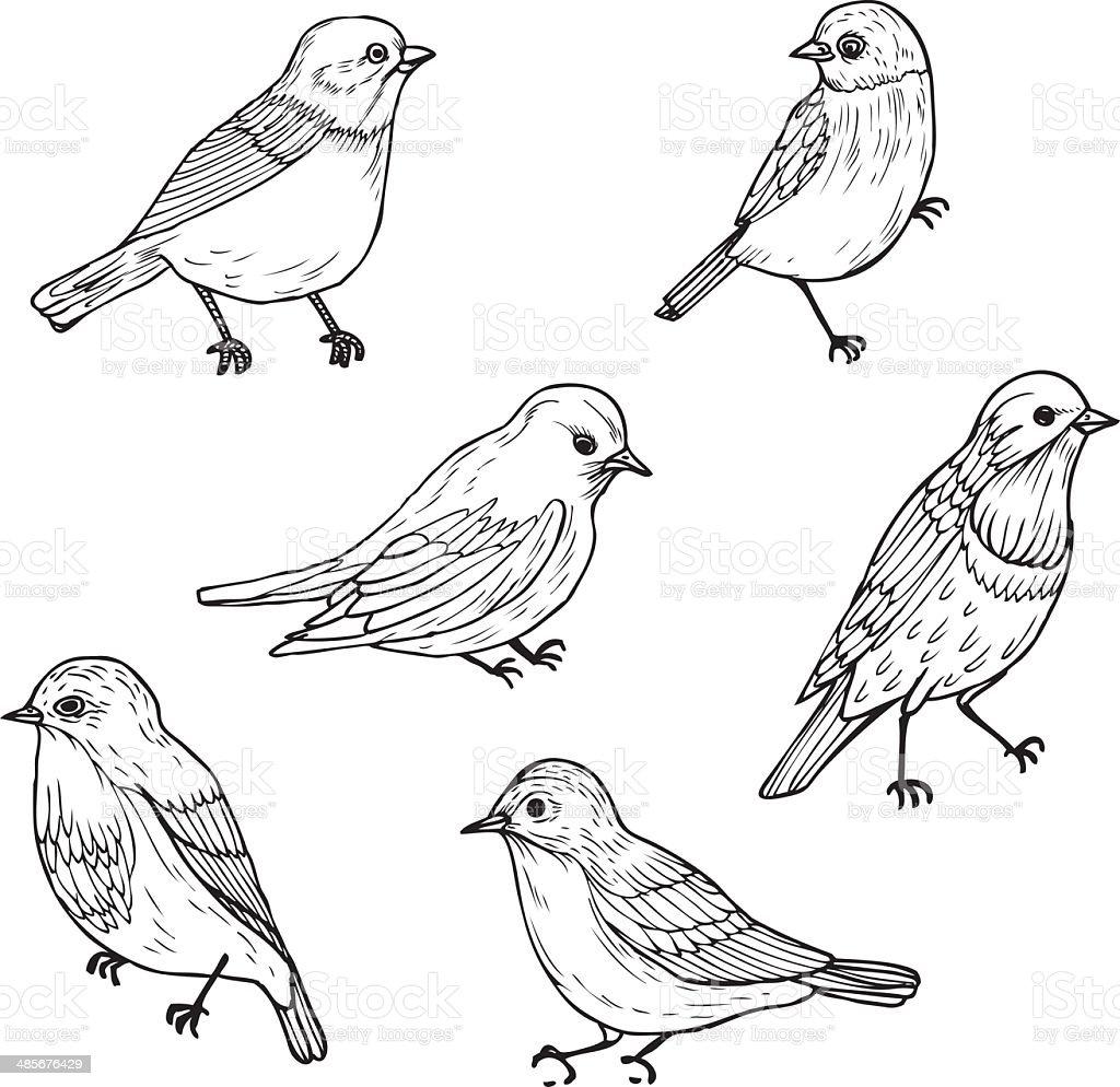 Muito Conjunto De Pássaros De Desenho Linear - Arte vetorial de acervo e  MK42