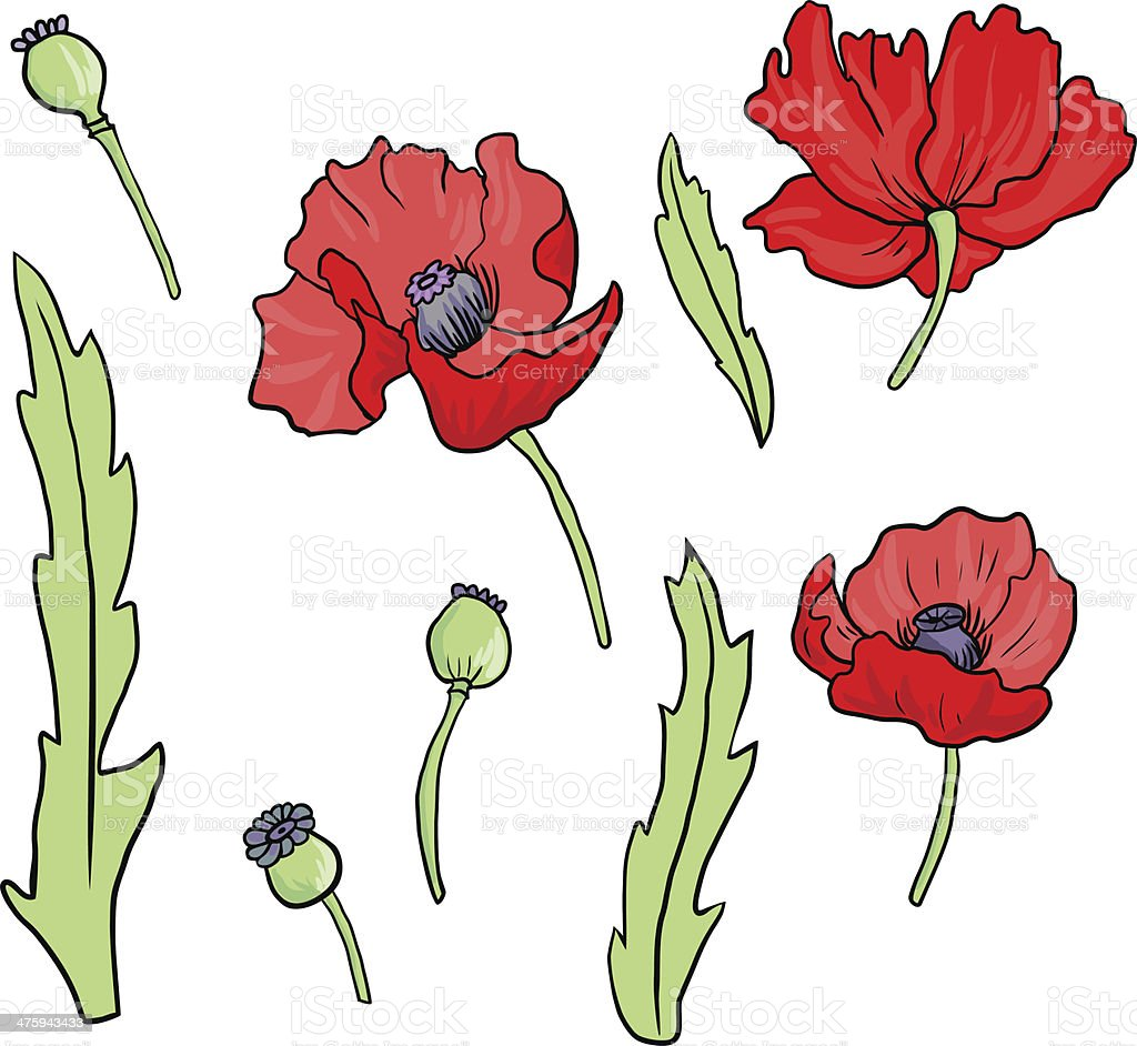 Set Of Linear Drawing Poppy Flowers Stock Vector Art More Images