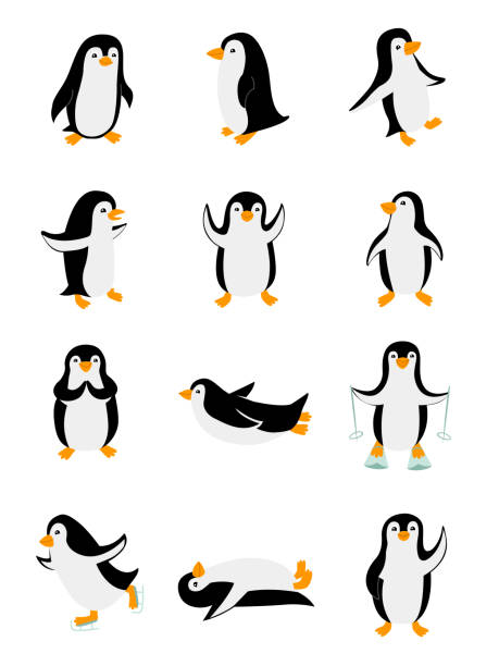 Set of little penguins in different poses. Funny animals isolated on white background. Cartoon characters vector illustration Set of little penguins in different poses. Funny animals isolated on white background. Cartoon characters vector illustration. Zoo clipart penguin stock illustrations